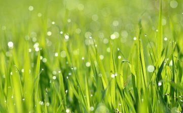 Conservation d'eau et interdictions d'arrosage
